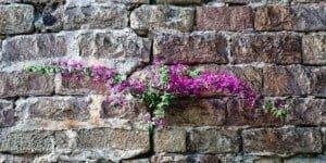 11833-bloom_wall.630w.tn