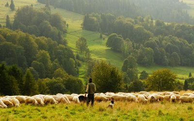 Pastor: Are You a Ceo or a Christian Shepherd?